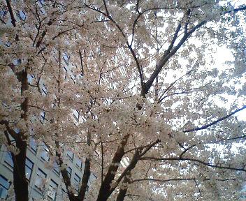 春なのに。春ですから。