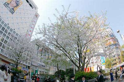 4月6日(月)今日の渋谷109前交差点_b0056983_1520937.jpg