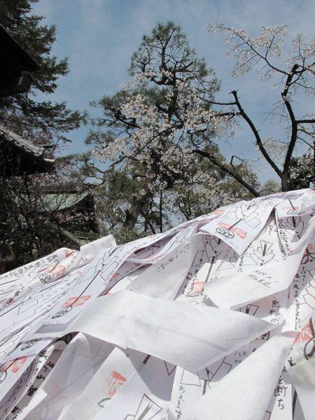 安井金比羅宮の桜 4/3 2009_c0108595_1235880.jpg