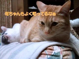 b0147203_2312359.jpg