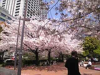 ス-ツと桜_a0114206_1251319.jpg