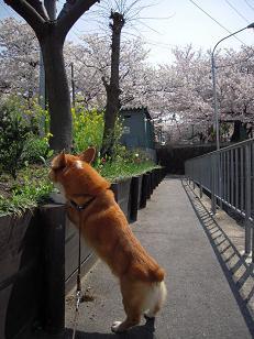 桜日和_f0190816_024386.jpg