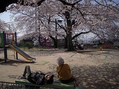 桜日和_f0190816_074552.jpg