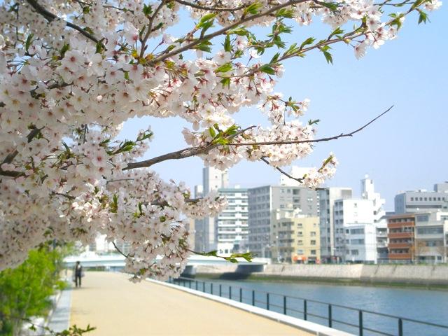 桜_a0115017_1259550.jpg