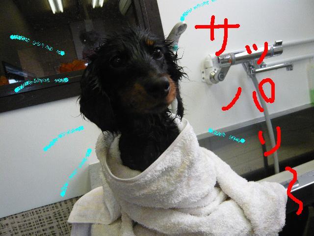 ヤル気ゼロ!_b0130018_11532389.jpg
