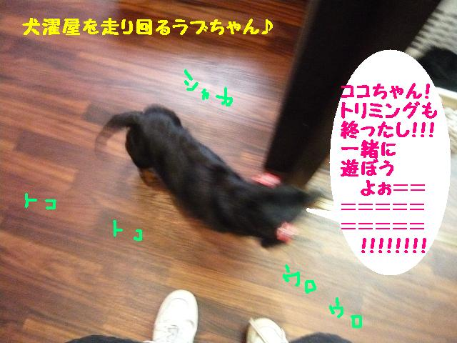 ヤル気ゼロ!_b0130018_11543377.jpg