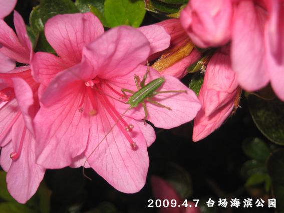 f0199618_1043887.jpg