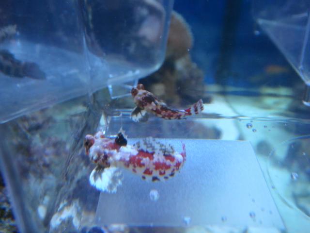 海水魚・サンゴ_f0189122_12125727.jpg