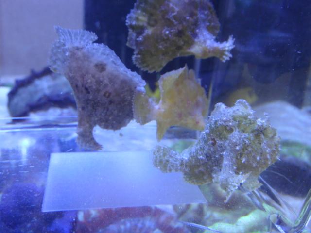 海水魚・サンゴ_f0189122_15513235.jpg