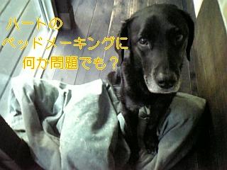 f0148927_19114339.jpg