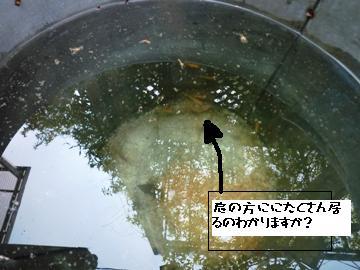 f0177841_12112741.jpg