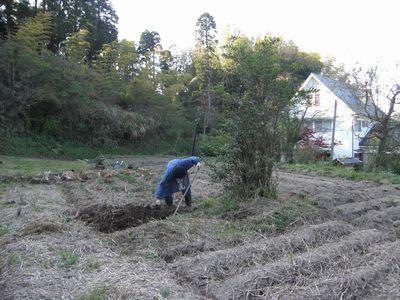 久しぶりの畑で夏野菜の植え付け!_e0151349_2238435.jpg