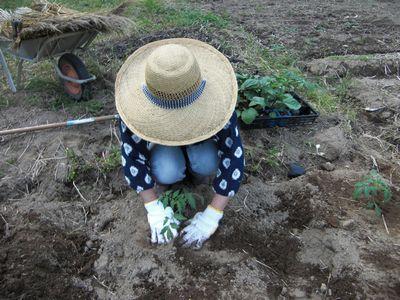 久しぶりの畑で夏野菜の植え付け!_e0151349_22393156.jpg