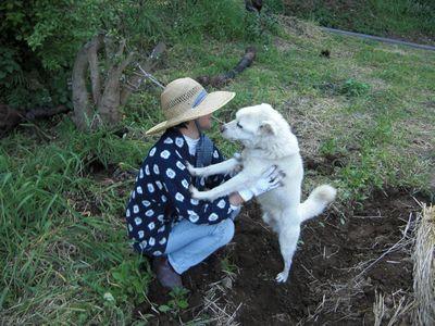久しぶりの畑で夏野菜の植え付け!_e0151349_22403442.jpg