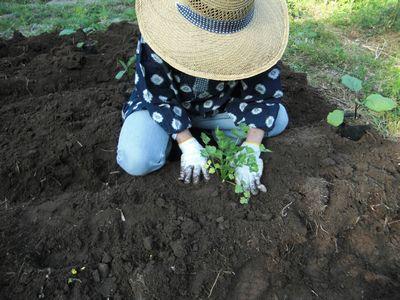 久しぶりの畑で夏野菜の植え付け!_e0151349_22411769.jpg