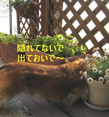 b0133861_1646661.jpg