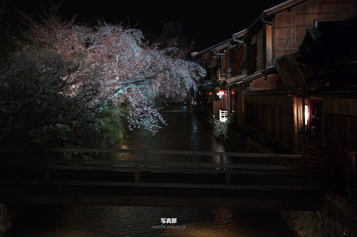 祇園 白川夜桜_f0021869_22555619.jpg