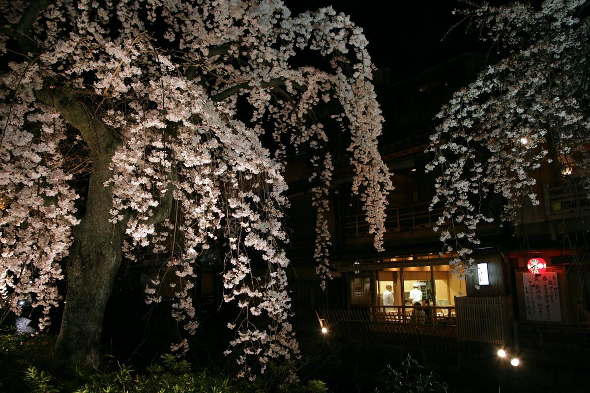 祇園 白川夜桜_f0021869_22582789.jpg