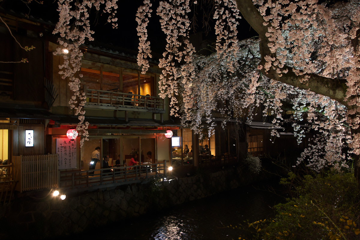 祇園 白川夜桜_f0021869_2315032.jpg
