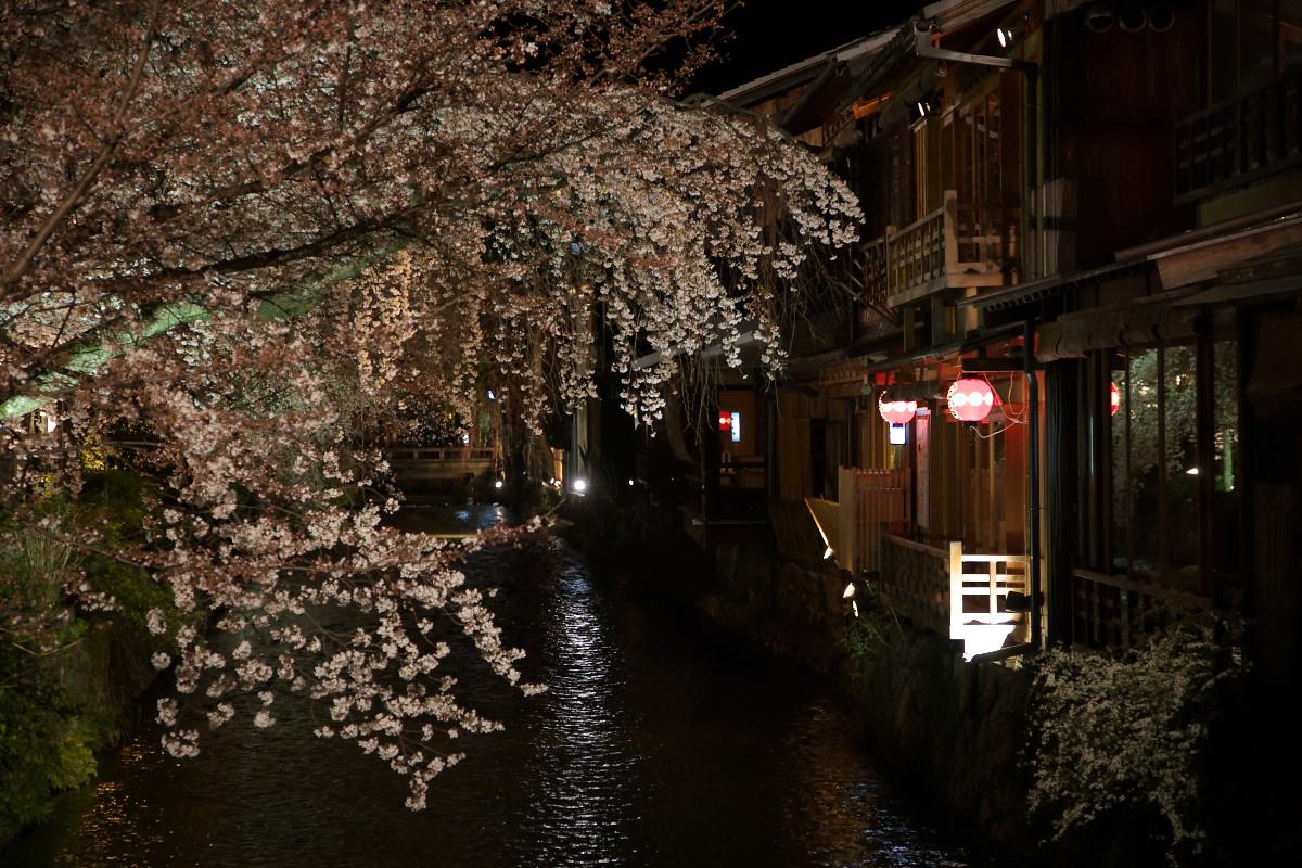 祇園 白川夜桜_f0021869_2322991.jpg