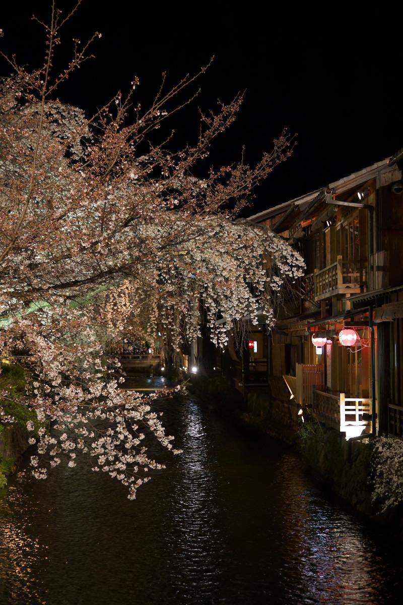 祇園 白川夜桜_f0021869_2353080.jpg