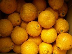 和歌山の柑橘と頂き物たち。_c0005672_22535792.jpg