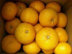 和歌山の柑橘と頂き物たち。_c0005672_22545689.jpg