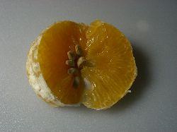 和歌山の柑橘と頂き物たち。_c0005672_22554194.jpg