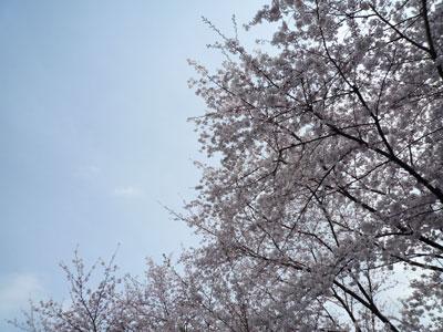 お花見@久我山の家_c0131878_17212729.jpg