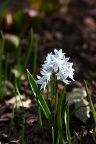 春のお散歩_a0107981_3495769.jpg