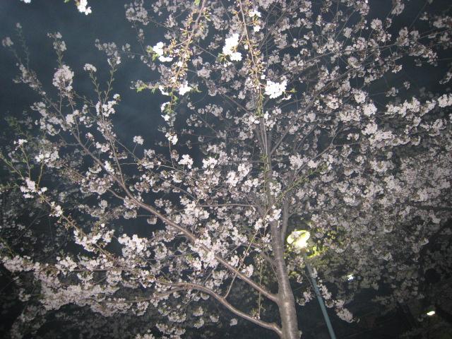 ☆お花見☆_f0202682_1951346.jpg