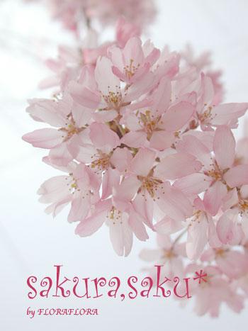さくらさく*目黒川  4月6日月曜日_a0115684_014559.jpg