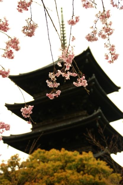 京都、桜、いろいろ_f0189086_20401018.jpg