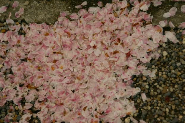 京都、桜、いろいろ_f0189086_20401944.jpg