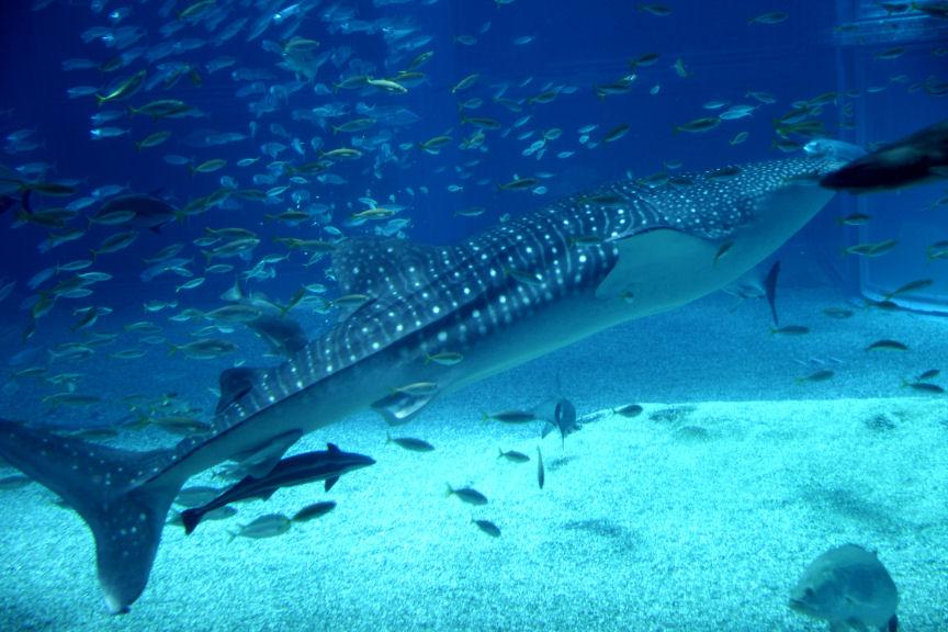 海遊館・・・_f0195893_19192185.jpg