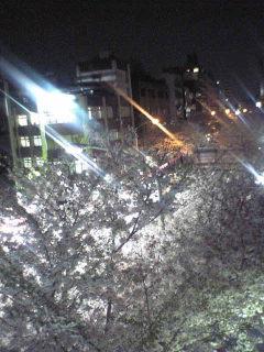 夜桜。_d0003502_9302744.jpg