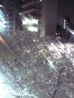夜桜。_d0003502_930896.jpg