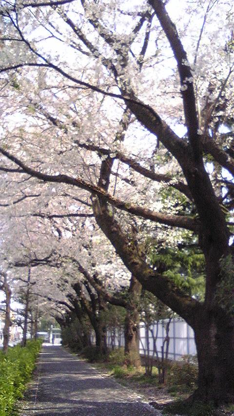 桜通信。vol. 3ぐらい_f0195703_17344816.jpg