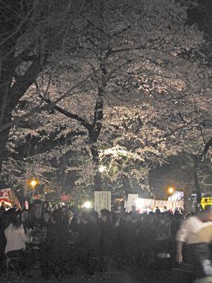 千鳥ヶ淵の桜をみて_d0138618_9132188.jpg