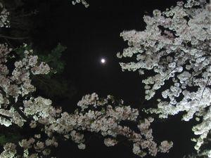 千鳥ヶ淵の桜をみて_d0138618_9133887.jpg