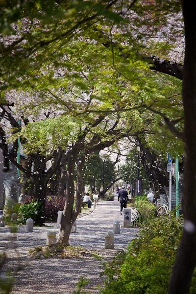 桜求めて3_f0077521_0101637.jpg
