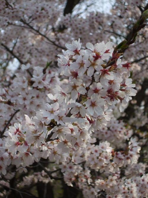 今日の桜えび情報_f0060530_84448.jpg