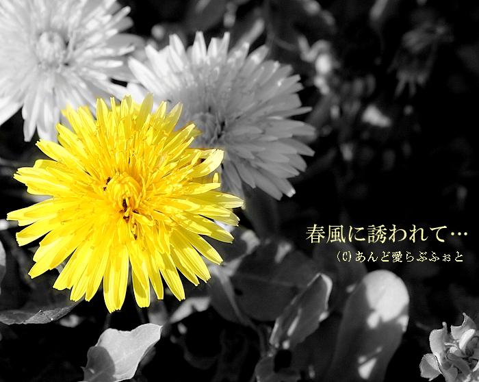 e0114138_19475014.jpg