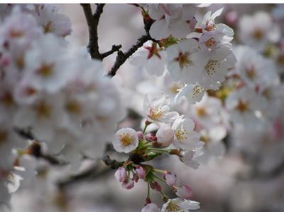 春うらら・・・_c0085543_22571484.jpg