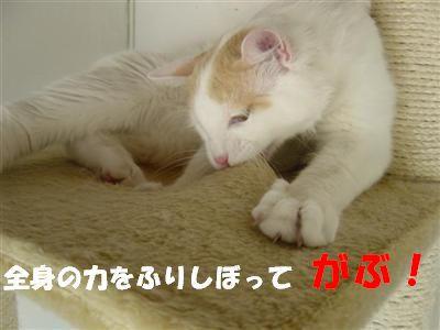 c0195250_17203038.jpg
