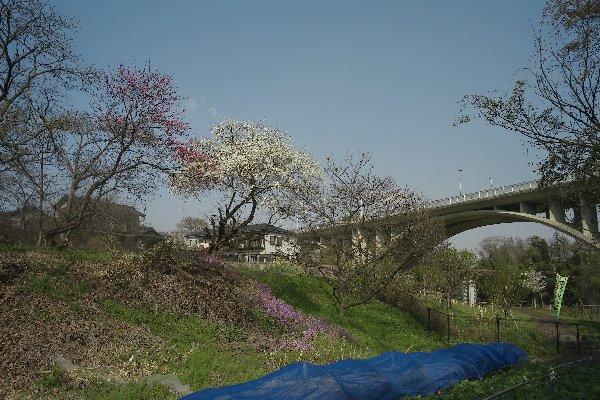 上谷戸大橋(1)_e0129750_22535997.jpg