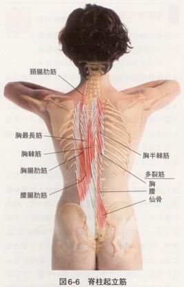 神経痛 肋間