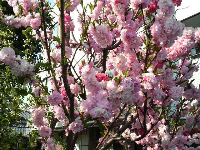 満腹土産 花よりケーキ_c0185356_20341014.jpg