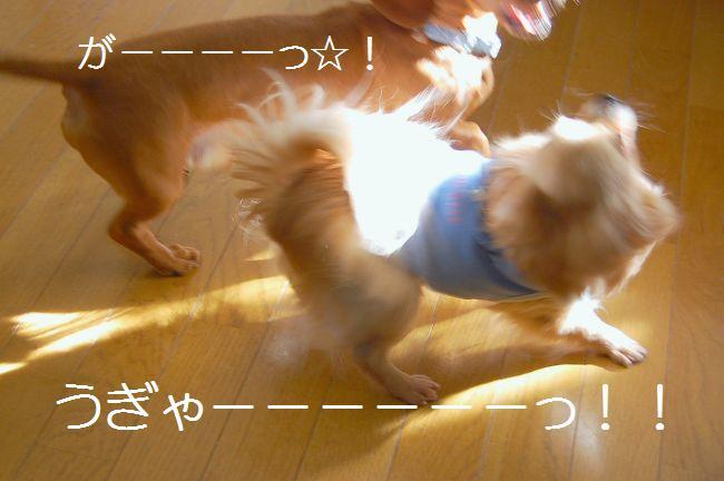 b0112758_1745050.jpg