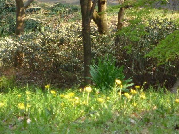 今日も桜…_b0093660_20471499.jpg